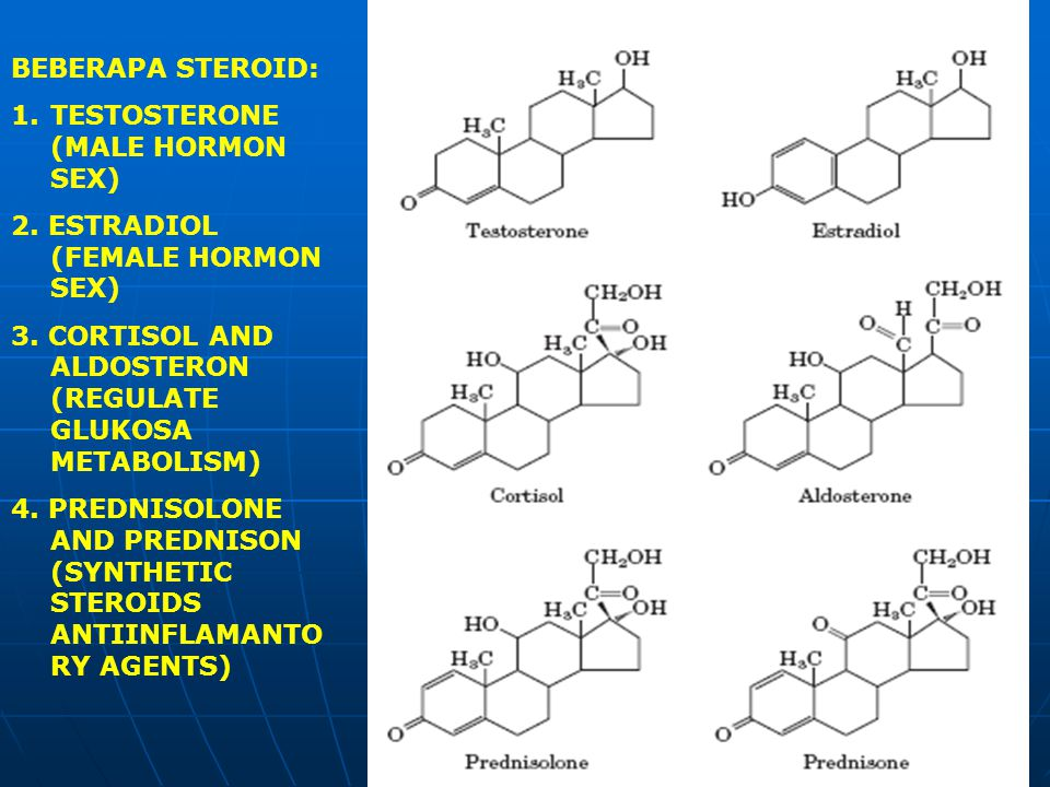BEBERAPA STEROID: TESTOSTERONE (MALE HORMON SEX) 2. ESTRADIOL (FEMALE HORMON SEX) 3. CORTISOL AND ALDOSTERON (REGULATE GLUKOSA METABOLISM)