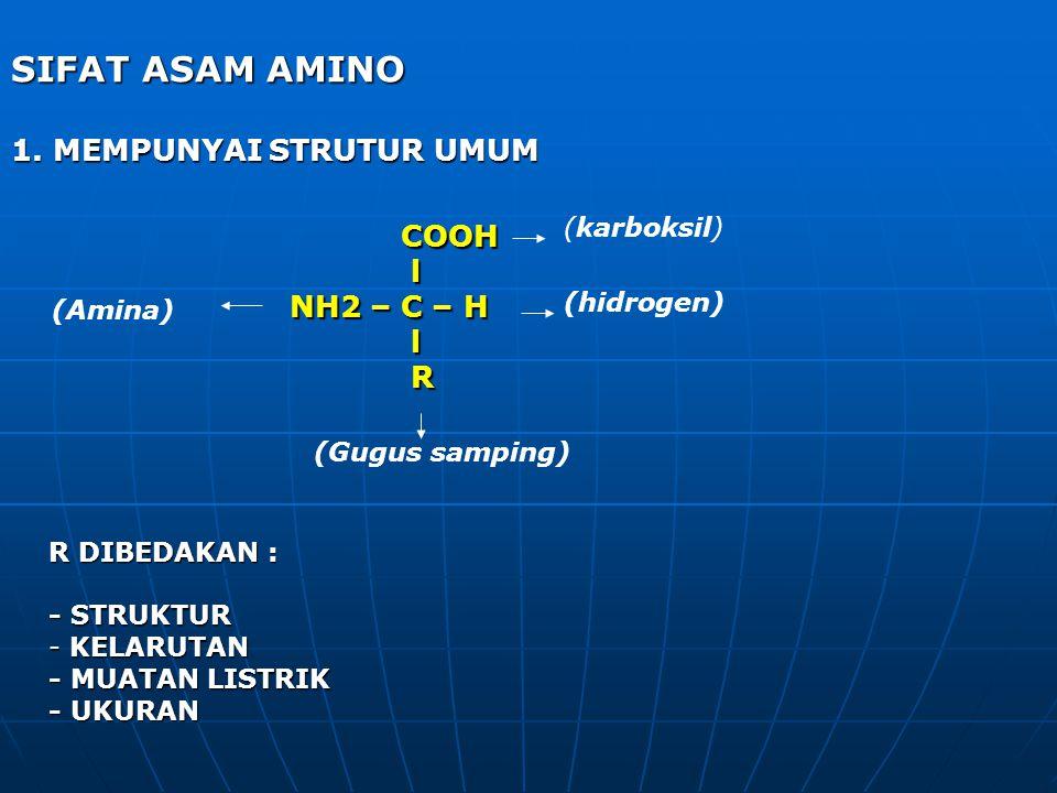 SIFAT ASAM AMINO 1. MEMPUNYAI STRUTUR UMUM COOH l NH2 – C – H R