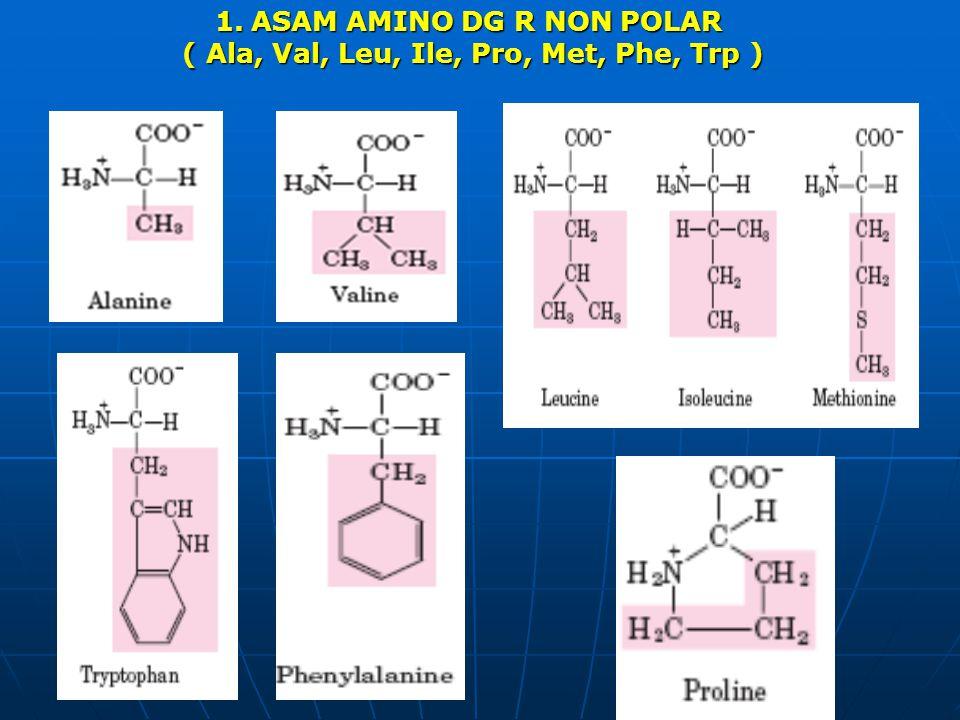 ASAM AMINO DG R NON POLAR ( Ala, Val, Leu, Ile, Pro, Met, Phe, Trp )