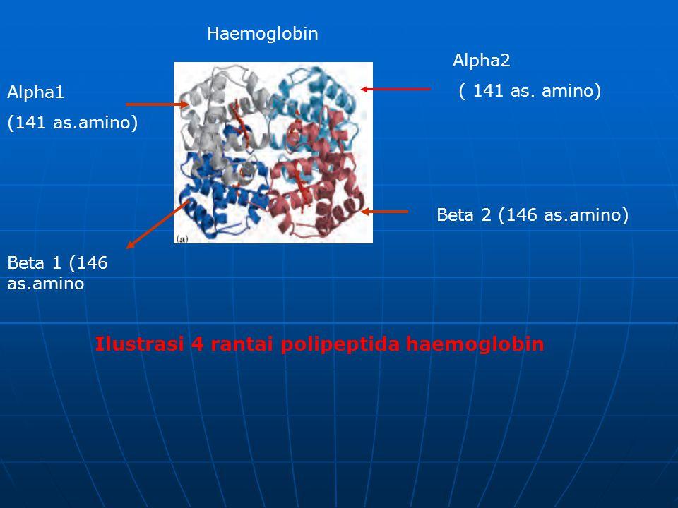 Ilustrasi 4 rantai polipeptida haemoglobin