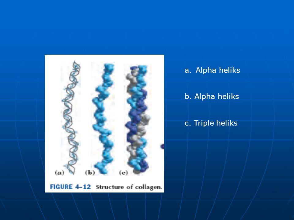 Alpha heliks b. Alpha heliks c. Triple heliks