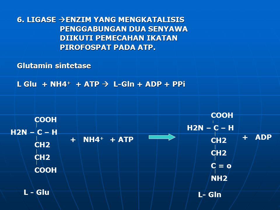 6. LIGASE ENZIM YANG MENGKATALISIS PENGGABUNGAN DUA SENYAWA DIIKUTI PEMECAHAN IKATAN PIROFOSPAT PADA ATP. Glutamin sintetase L Glu + NH4+ + ATP  L-Gln + ADP + PPi