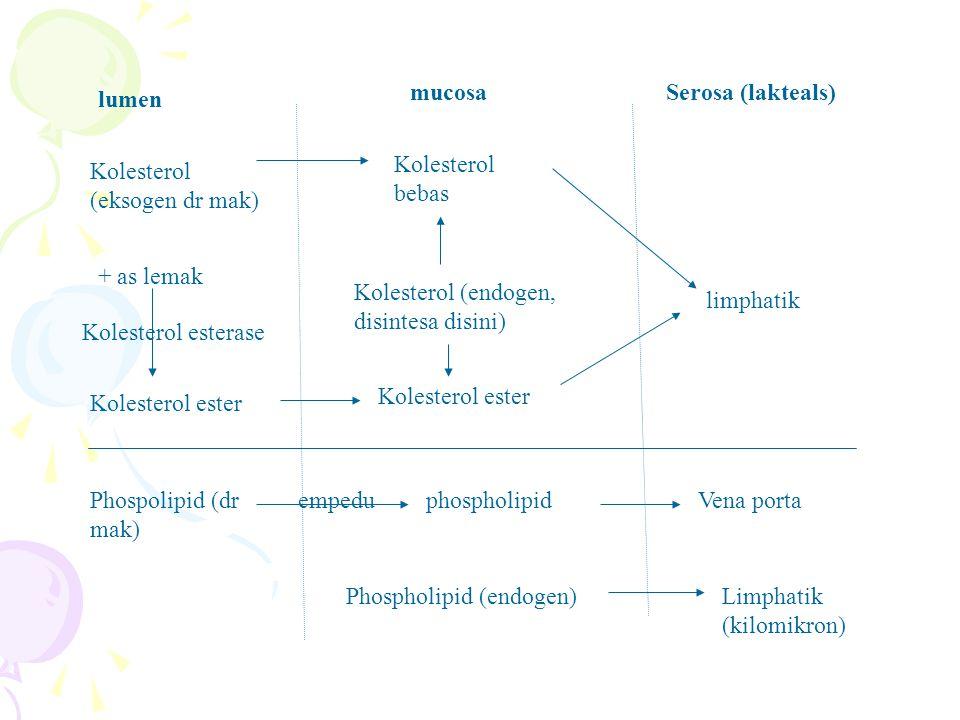 mucosa Serosa (lakteals) lumen. Kolesterol bebas. Kolesterol (eksogen dr mak) + as lemak. Kolesterol (endogen, disintesa disini)