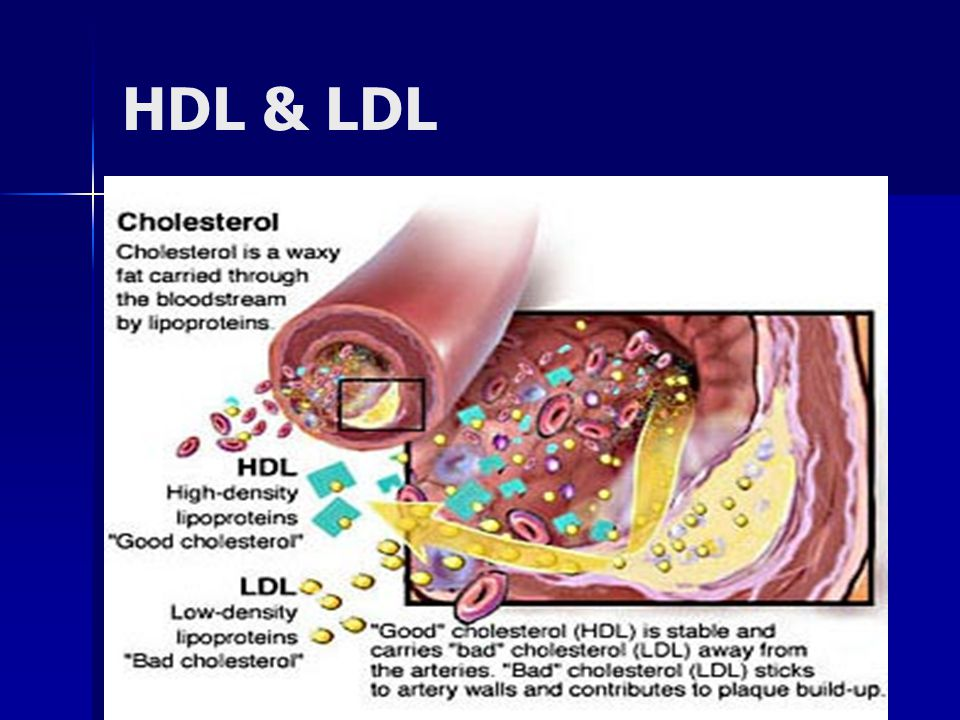 HDL & LDL