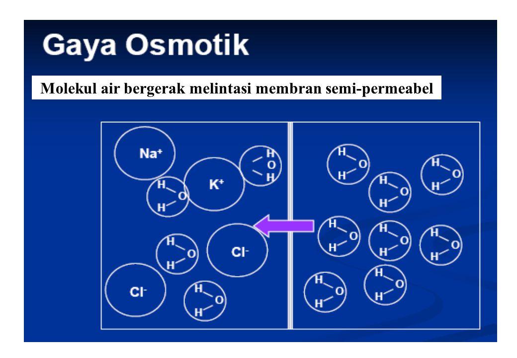 Molekul air bergerak melintasi membran semi-permeabel