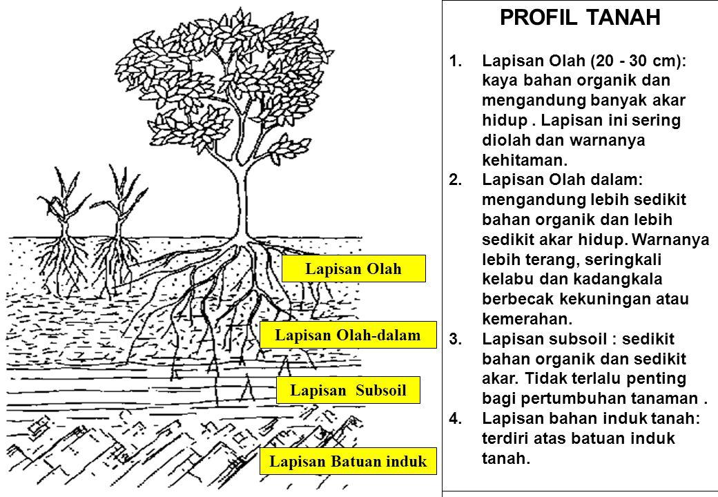 PROFIL TANAH Lapisan Olah (20 - 30 cm): kaya bahan organik dan mengandung banyak akar hidup . Lapisan ini sering diolah dan warnanya kehitaman.