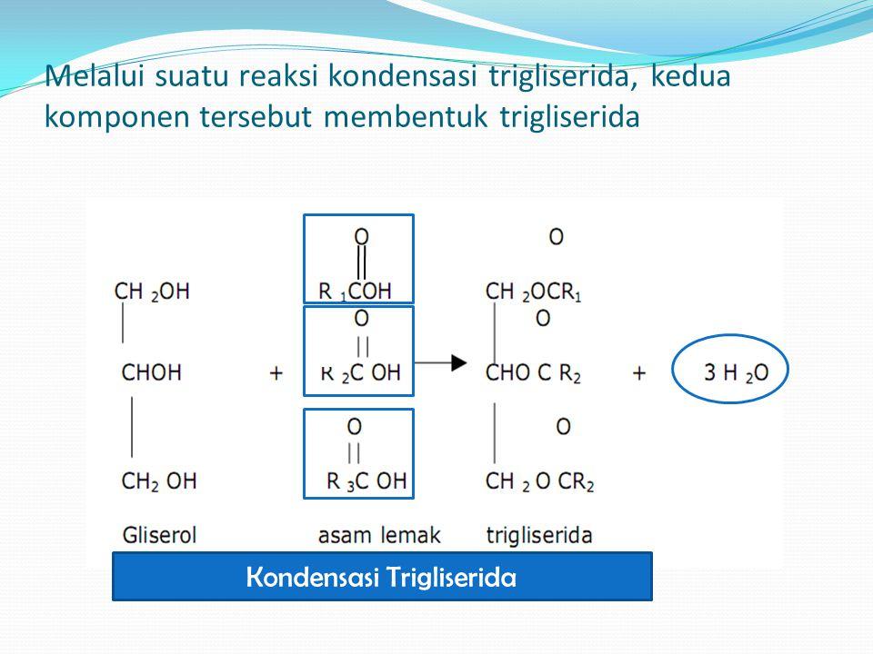 Kondensasi Trigliserida