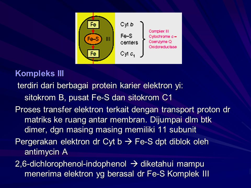 Kompleks III terdiri dari berbagai protein karier elektron yi: sitokrom B, pusat Fe-S dan sitokrom C1.