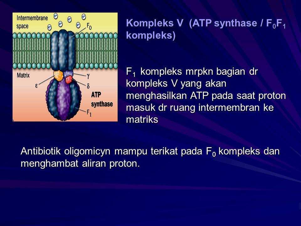 Kompleks V (ATP synthase / F0F1 kompleks)