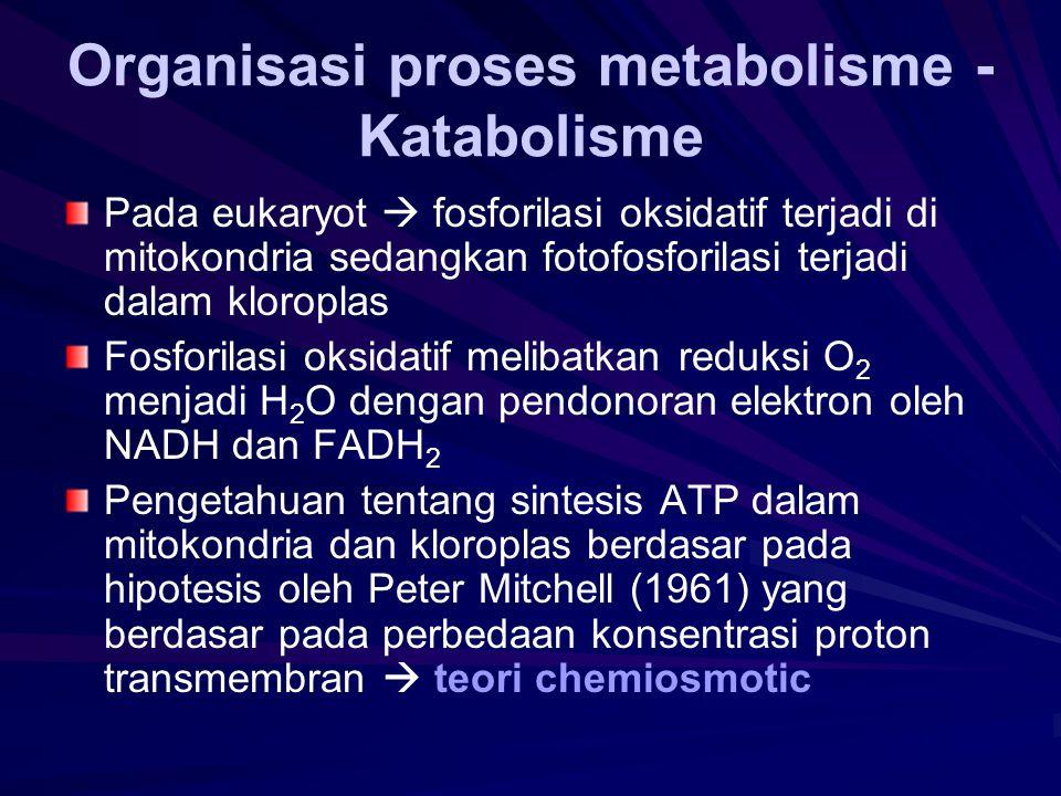 Organisasi proses metabolisme - Katabolisme
