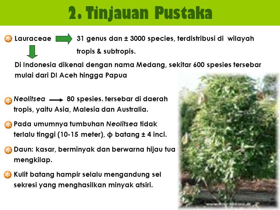 2. Tinjauan Pustaka Lauraceae 31 genus dan ± 3000 species, terdistribusi di wilayah. tropis & subtropis.