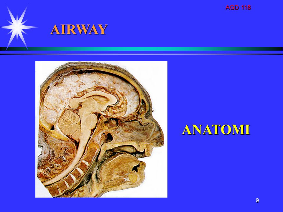 AGD 118 AIRWAY ANATOMI