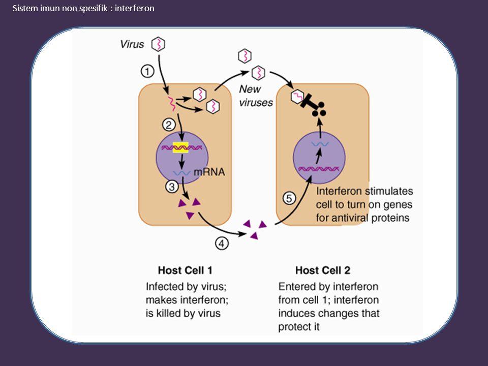 Sistem imun non spesifik : interferon