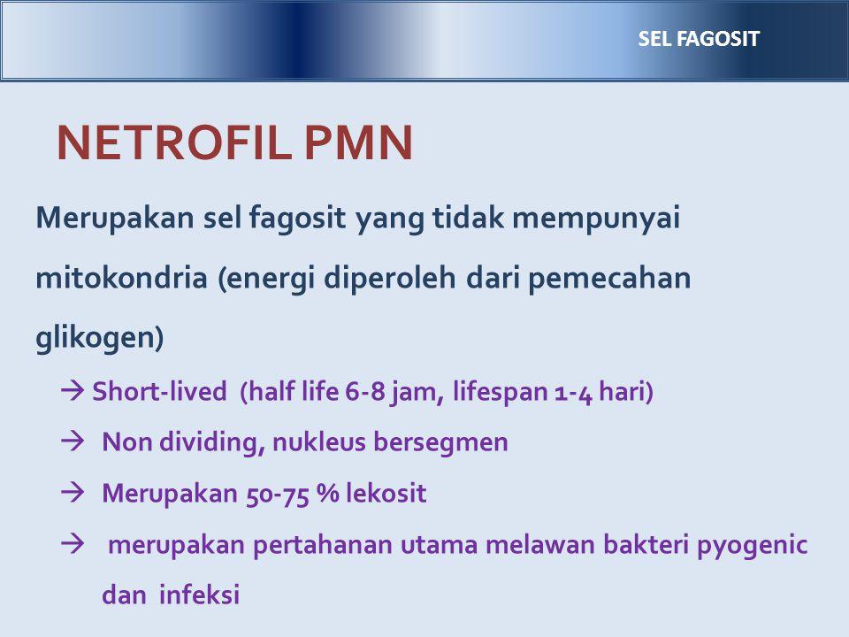 SEL FAGOSIT NETROFIL PMN. Merupakan sel fagosit yang tidak mempunyai mitokondria (energi diperoleh dari pemecahan glikogen)