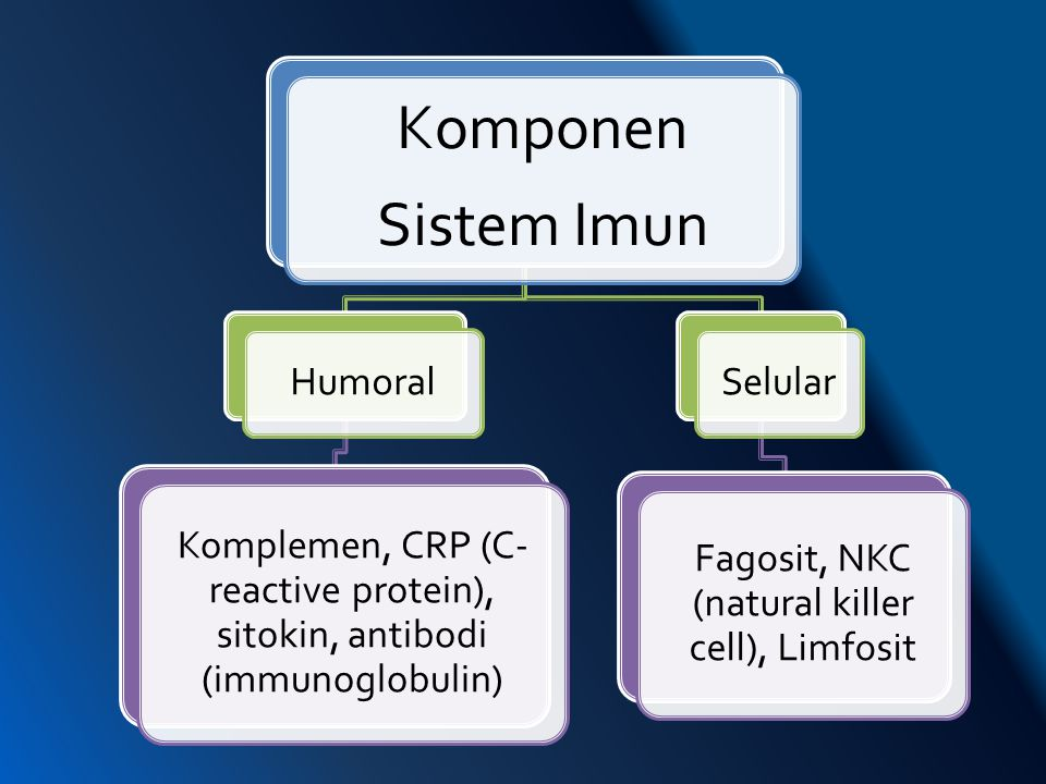 Fagosit, NKC (natural killer cell), Limfosit