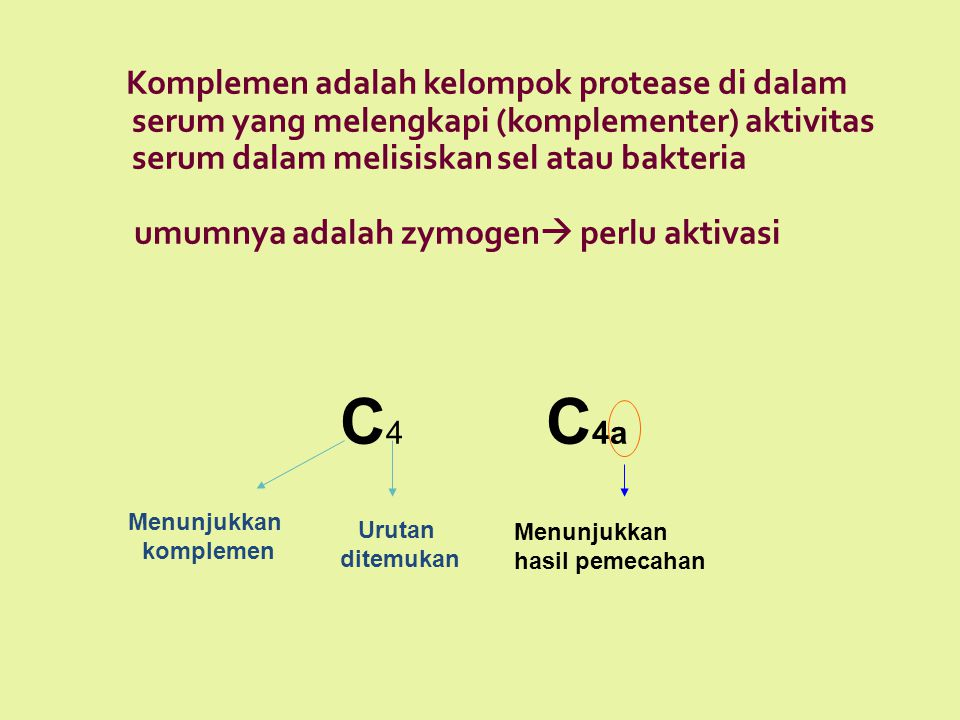Komplemen adalah kelompok protease di dalam serum yang melengkapi (komplementer) aktivitas serum dalam melisiskan sel atau bakteria umumnya adalah zymogen perlu aktivasi