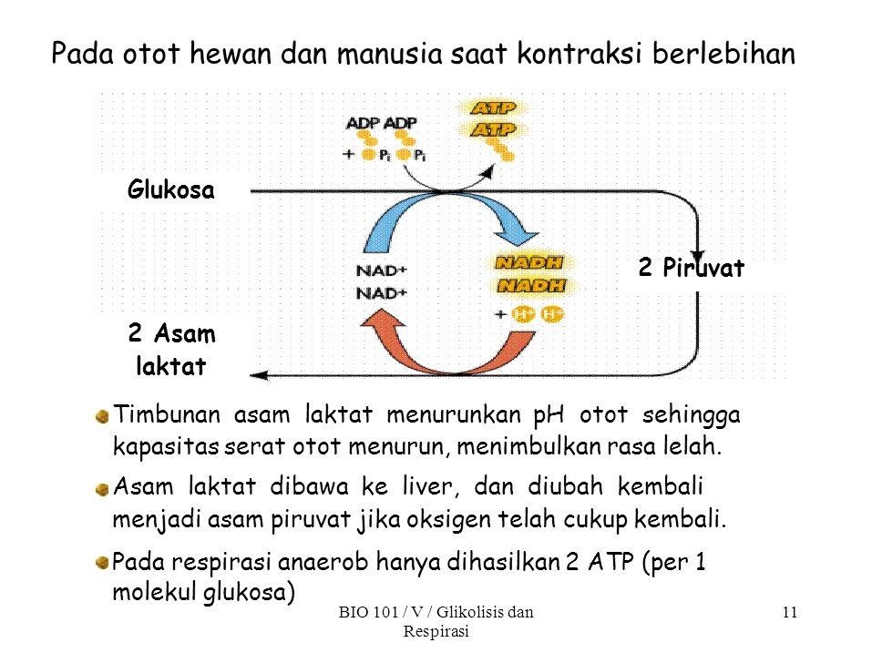 Pada otot hewan dan manusia saat kontraksi berlebihan