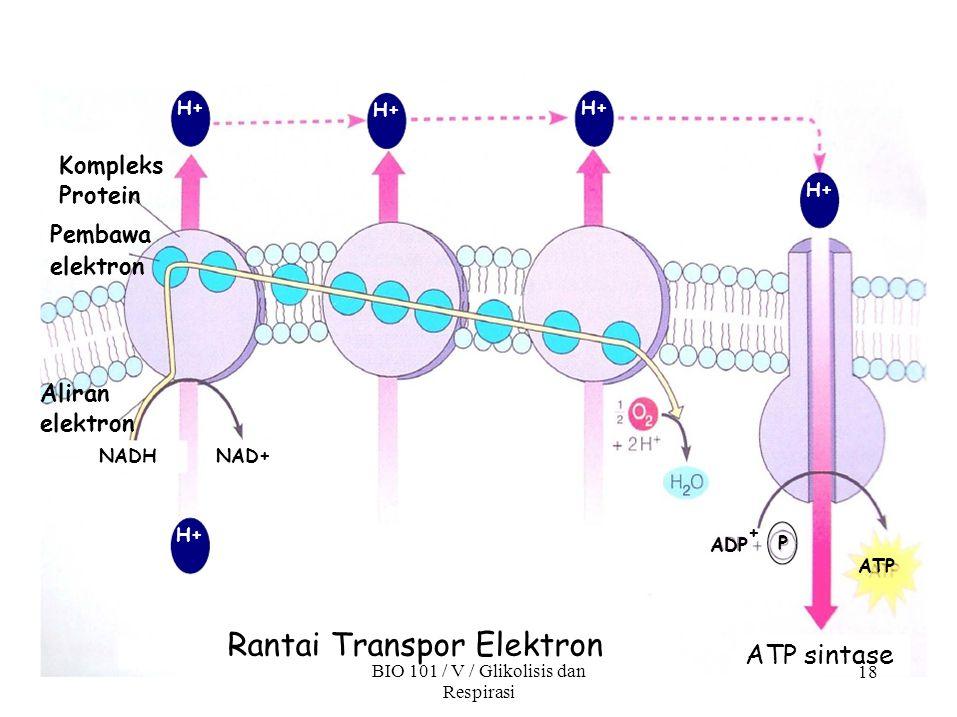 Rantai Transpor Elektron BIO 101 / V / Glikolisis dan
