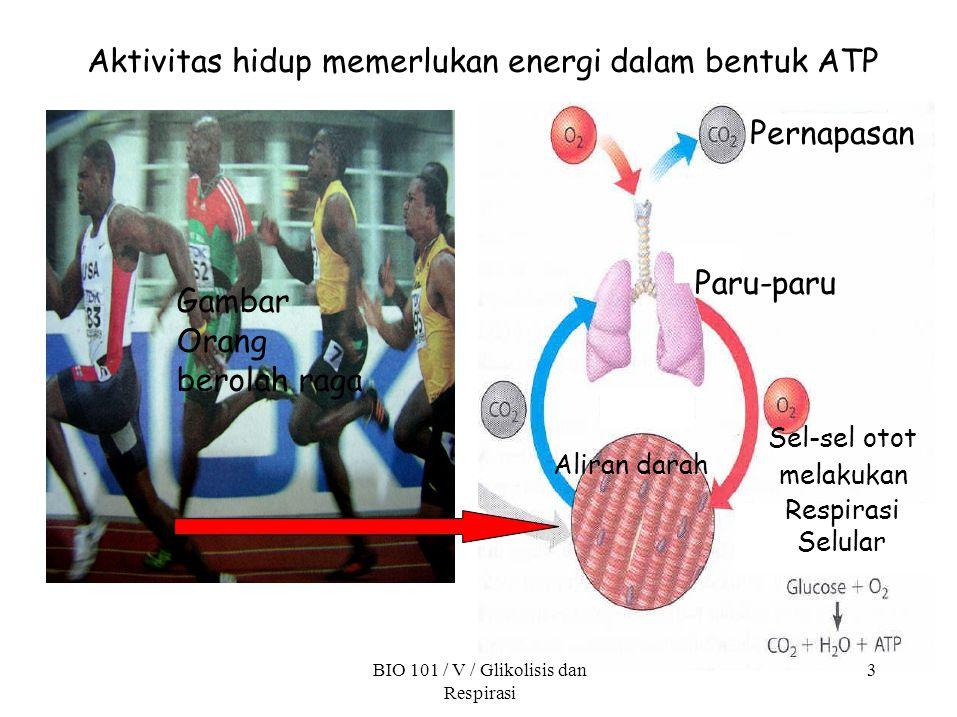 Aktivitas hidup memerlukan energi dalam bentuk ATP Pernapasan