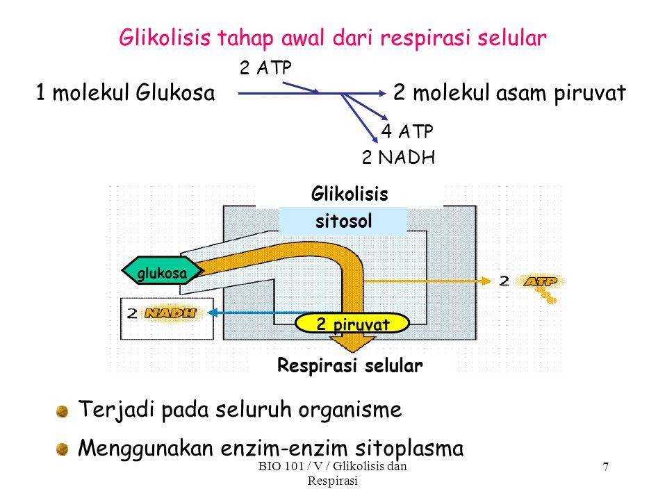 Glikolisis tahap awal dari respirasi selular