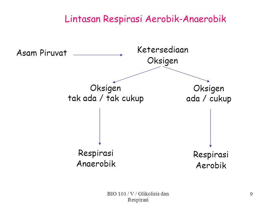 Lintasan Respirasi Aerobik-Anaerobik