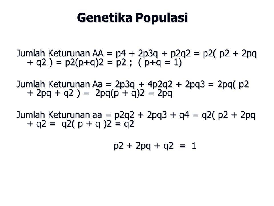 Genetika Populasi Jumlah Keturunan AA = p4 + 2p3q + p2q2 = p2( p2 + 2pq + q2 ) = p2(p+q)2 = p2 ; ( p+q = 1)