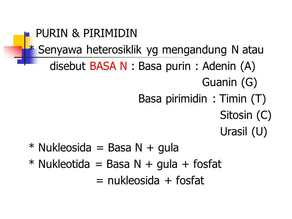 PURIN & PIRIMIDIN * Senyawa heterosiklik yg mengandung N atau. disebut BASA N : Basa purin : Adenin (A)
