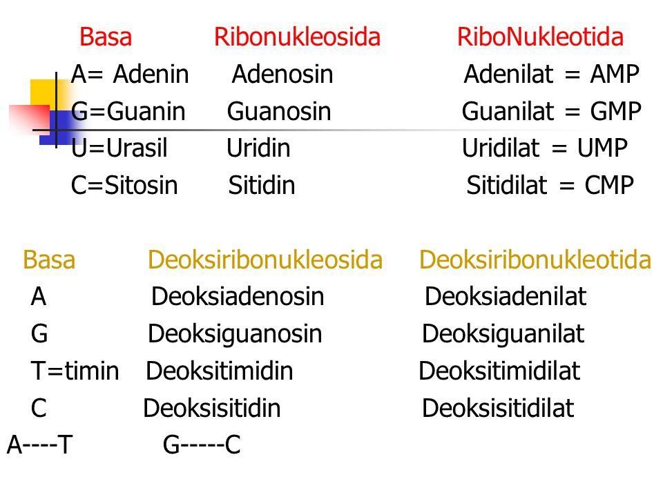 Basa Ribonukleosida RiboNukleotida
