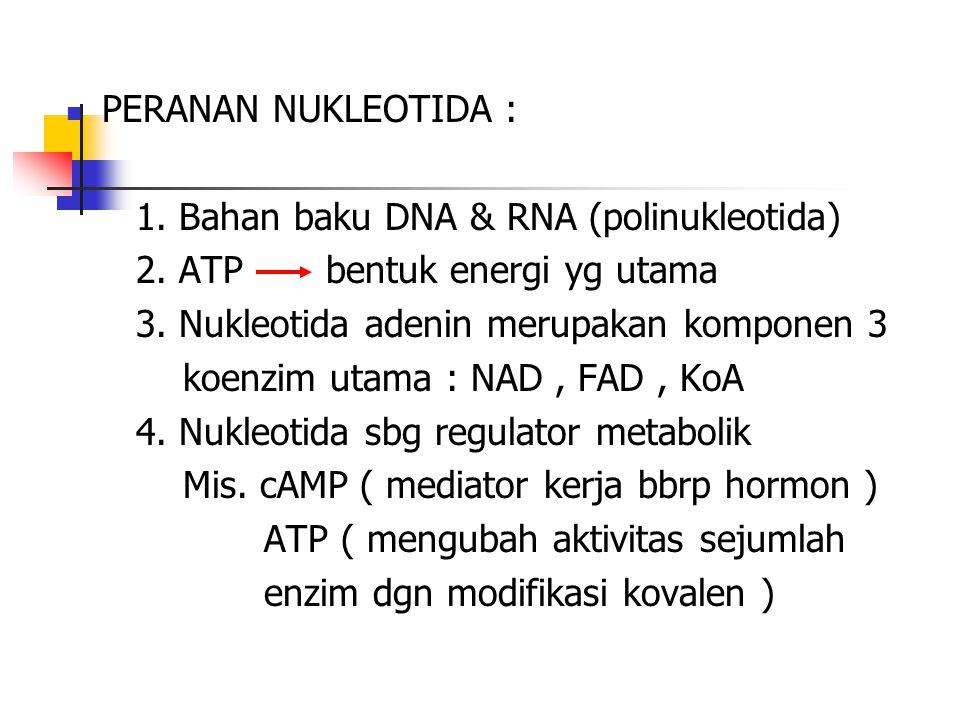 PERANAN NUKLEOTIDA : 1. Bahan baku DNA & RNA (polinukleotida) 2. ATP bentuk energi yg utama.