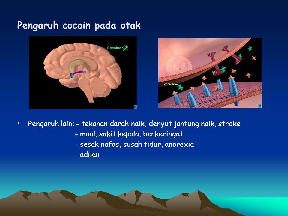 Pengaruh cocain pada otak