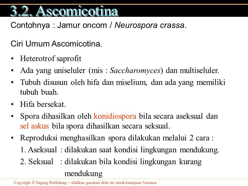 3.2. Ascomicotina Contohnya : Jamur oncom / Neurospora crassa.