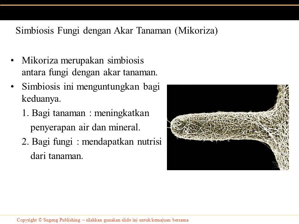 Simbiosis Fungi dengan Akar Tanaman (Mikoriza)