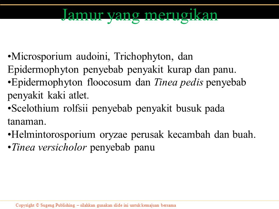 Jamur yang merugikan Microsporium audoini, Trichophyton, dan Epidermophyton penyebab penyakit kurap dan panu.