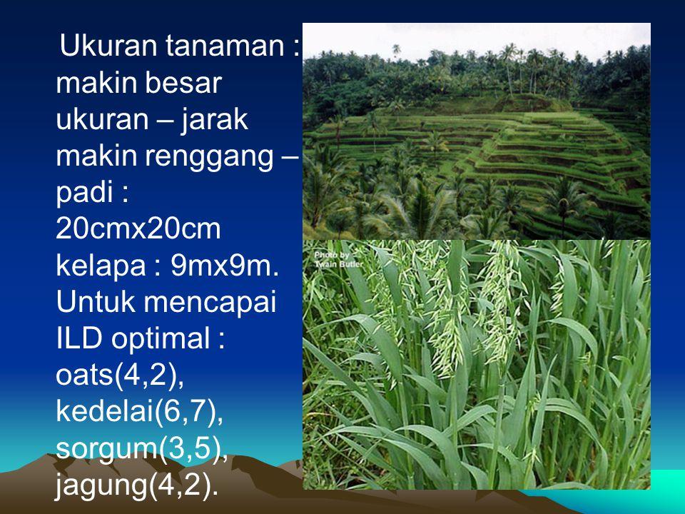 Ukuran tanaman : makin besar ukuran – jarak makin renggang – padi : 20cmx20cm kelapa : 9mx9m.