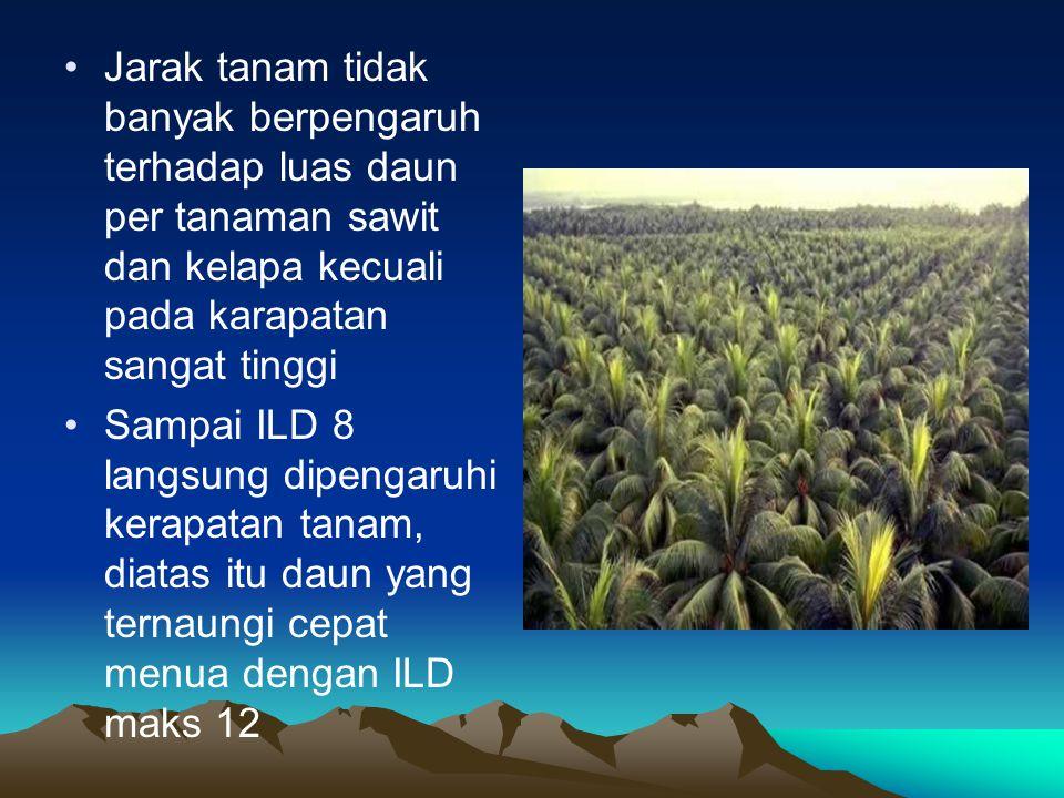 Jarak tanam tidak banyak berpengaruh terhadap luas daun per tanaman sawit dan kelapa kecuali pada karapatan sangat tinggi