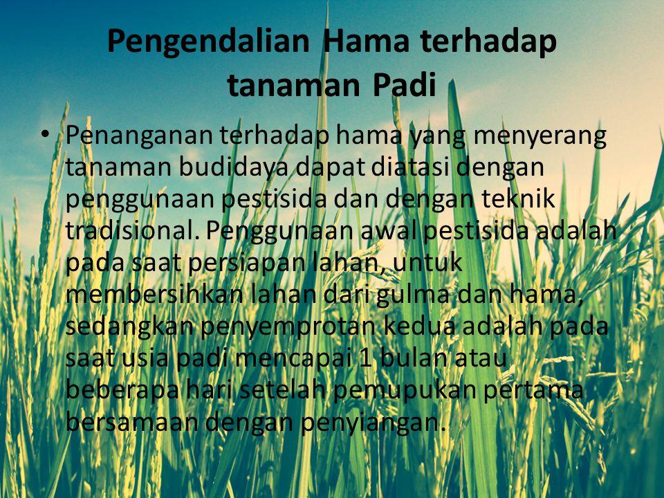 Pengendalian Hama terhadap tanaman Padi