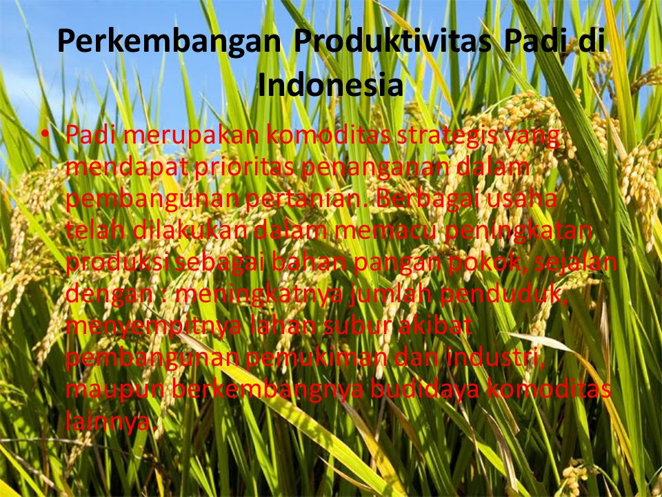 Perkembangan Produktivitas Padi di Indonesia