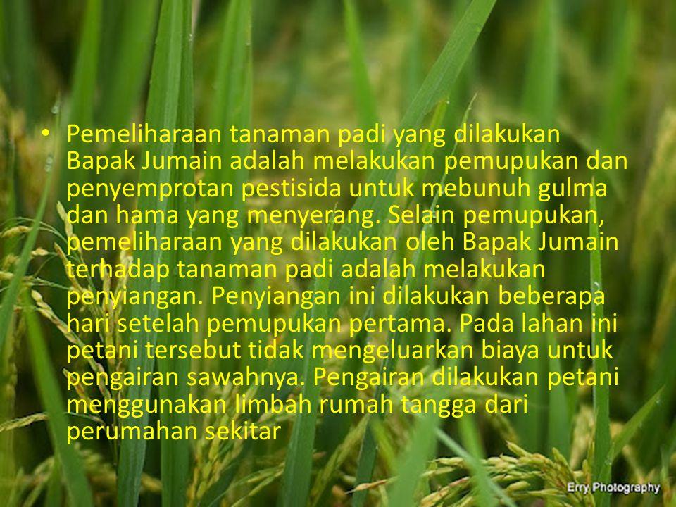 Pemeliharaan tanaman padi yang dilakukan Bapak Jumain adalah melakukan pemupukan dan penyemprotan pestisida untuk mebunuh gulma dan hama yang menyerang.