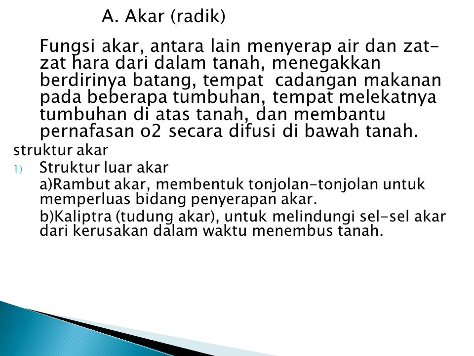A. Akar (radik) struktur akar Struktur luar akar