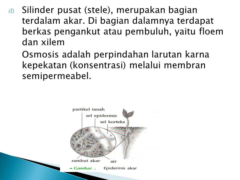 Silinder pusat (stele), merupakan bagian terdalam akar