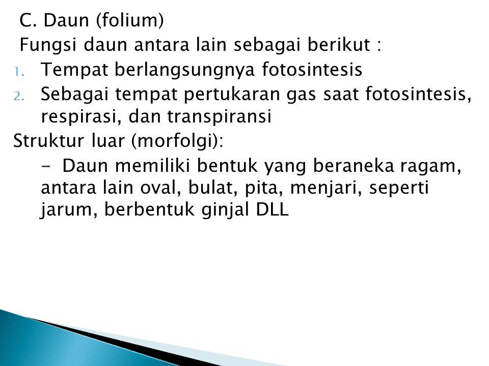 C. Daun (folium) Fungsi daun antara lain sebagai berikut : Tempat berlangsungnya fotosintesis.