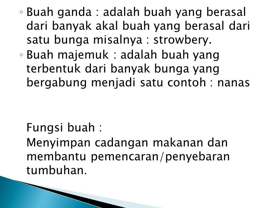 Buah ganda : adalah buah yang berasal dari banyak akal buah yang berasal dari satu bunga misalnya : strowbery.