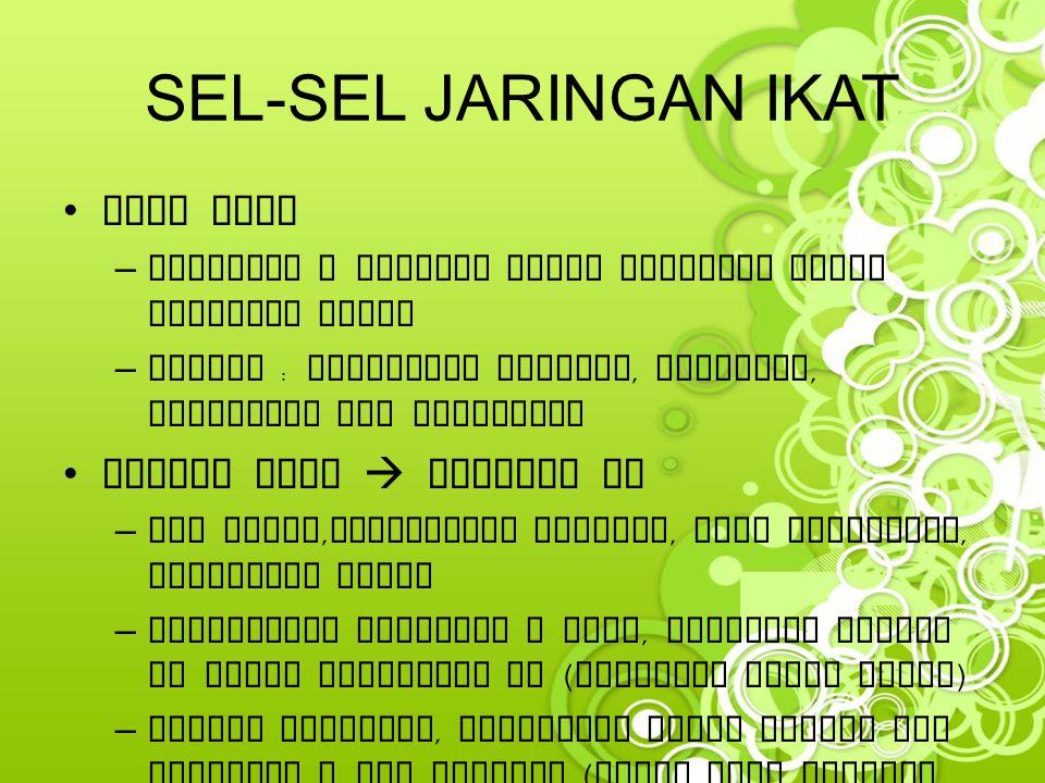 SEL-SEL JARINGAN IKAT Mast Cell Plasma Cell  pmbntuk Ig