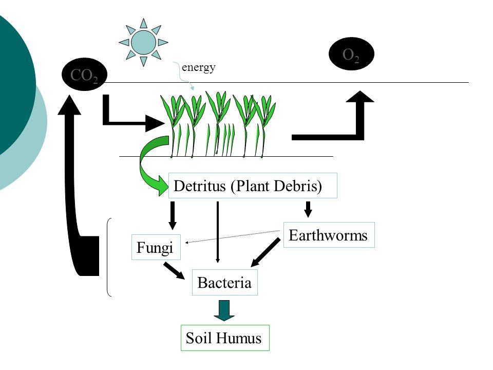 Detritus (Plant Debris)
