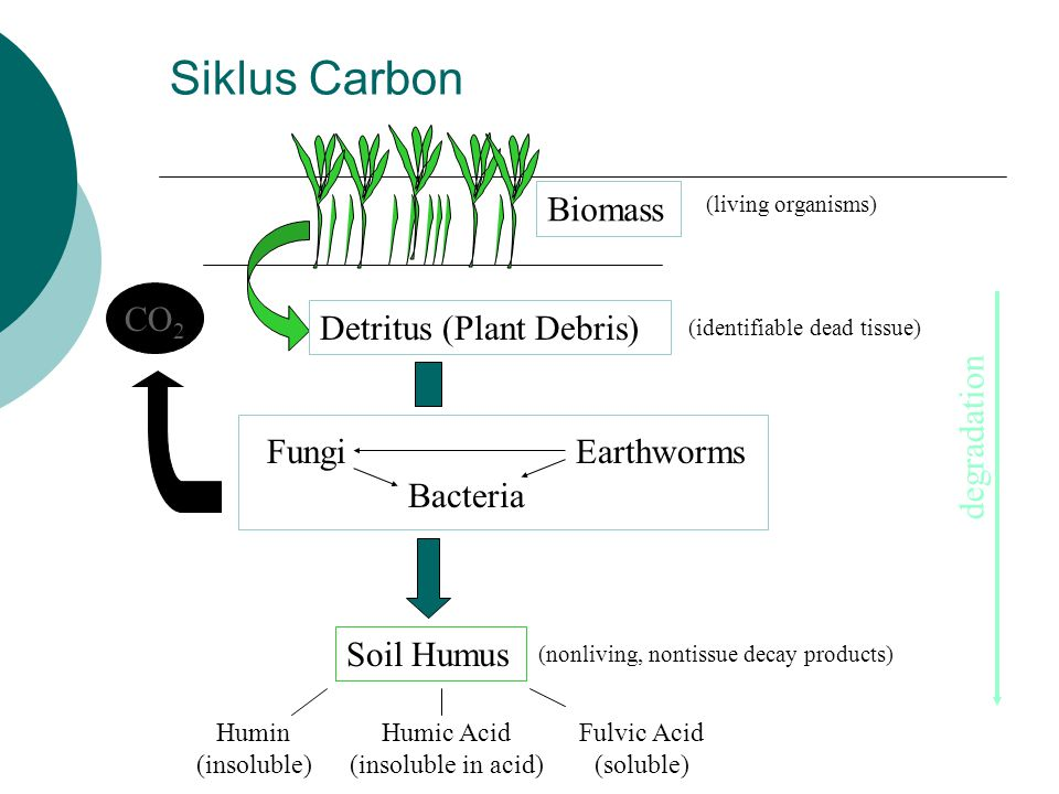 Siklus Carbon Biomass CO2 Detritus (Plant Debris) degradation Fungi