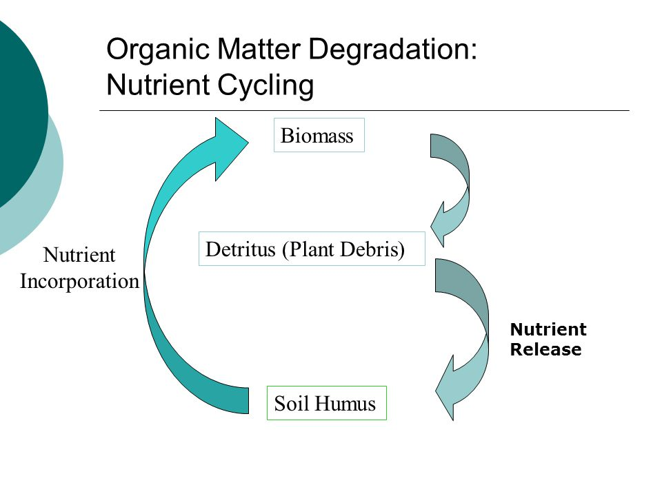 Organic Matter Degradation: Nutrient Cycling