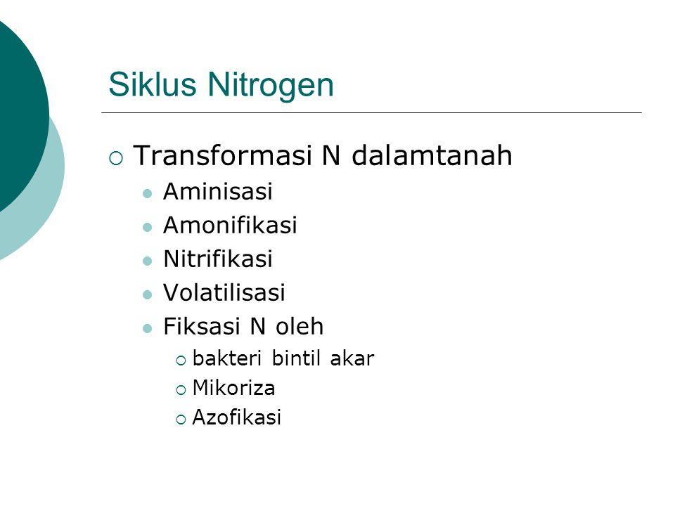 Siklus Nitrogen Transformasi N dalamtanah Aminisasi Amonifikasi