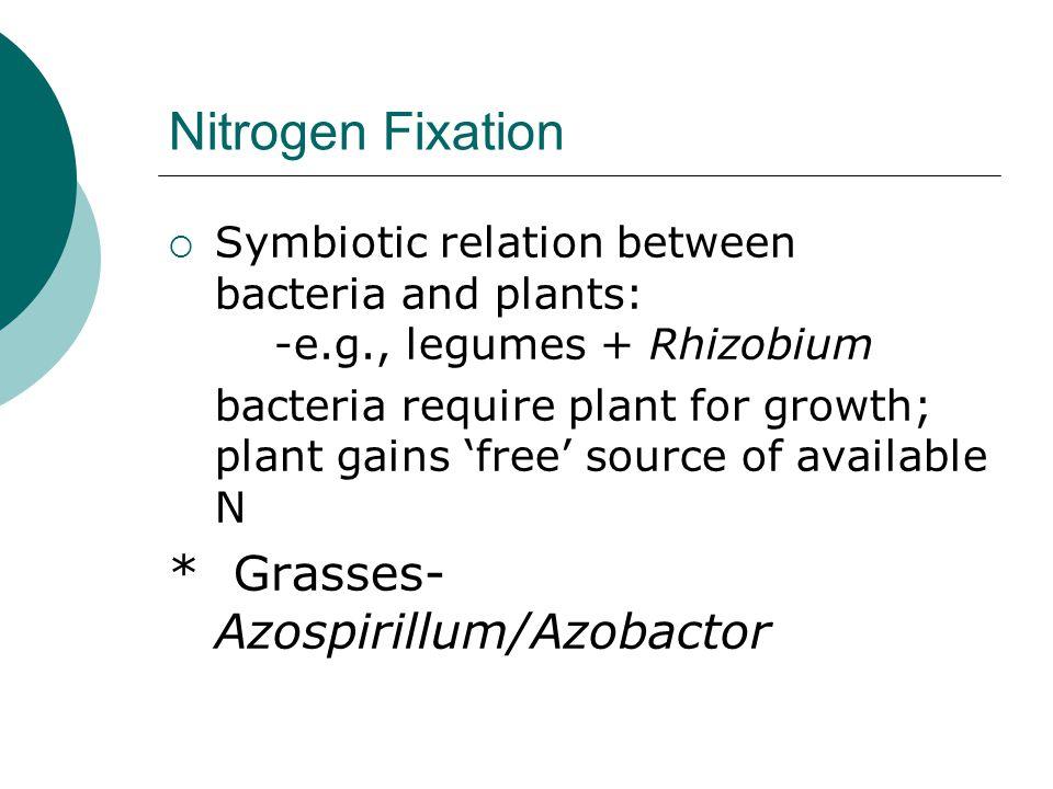 Nitrogen Fixation * Grasses-Azospirillum/Azobactor