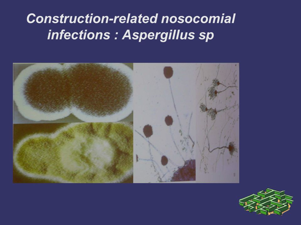Construction-related nosocomial infections : Aspergillus sp