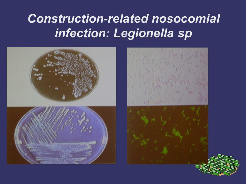 Construction-related nosocomial infection: Legionella sp